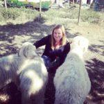 Charlotte Thieffry avec des chèvres Angora.